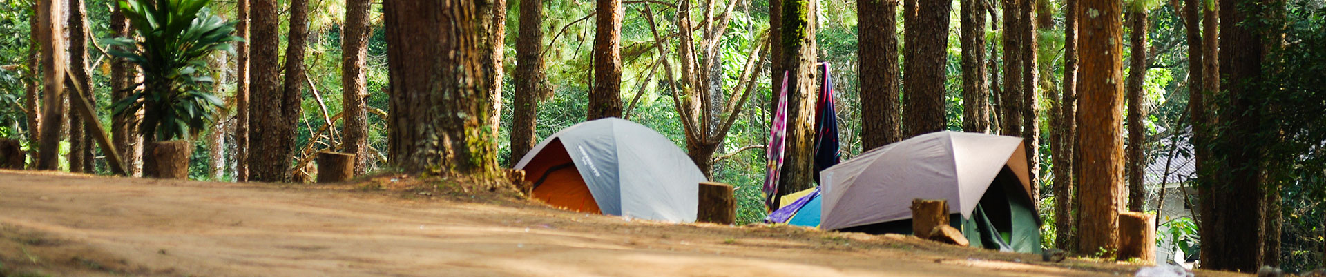 Campground Management Software